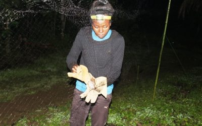 ERuDeF Institute, CAMHERP-CBF Conduct Wildlife at Mt Muanenguba